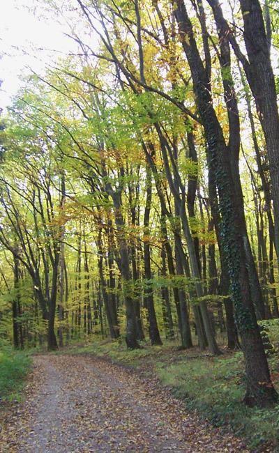 Autumn Forest by Tavaron.
