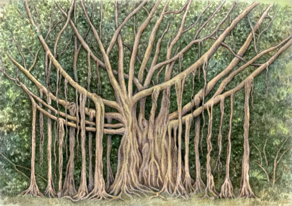 banyan tree by Willem