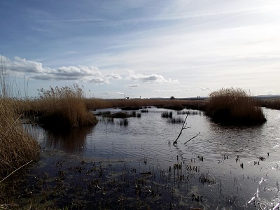 View of a Reedbed
