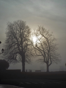 Two trees with a hazy sun behind them