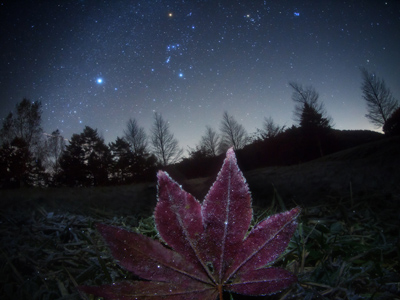 A magical photograph of a frosted leaf and a starry night sky, courtesy of Masahiro Miyasaka.
