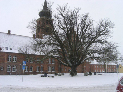 A horse chestnut tree in winter