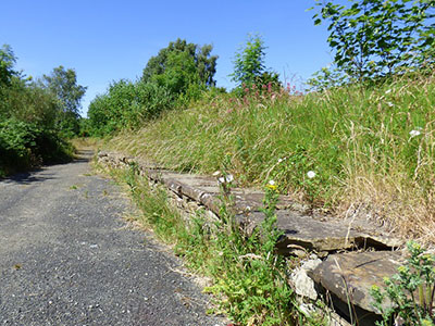 Derelict Railway Platform covered in Wild Flowers