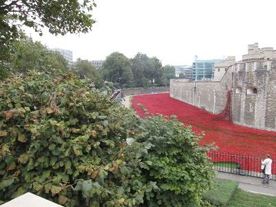 Poppies in the moat.