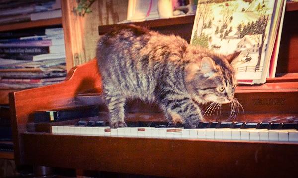 Kitty on the keys