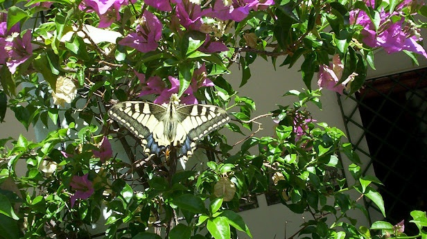 A European Swallowtail butterfly which I had a close encounter with when visiting Spain in 2010