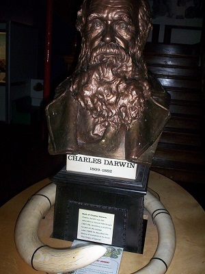 A bust of Charles Darwin