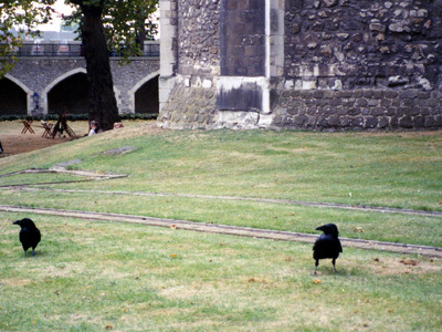 Two of the Tower of London Ravens