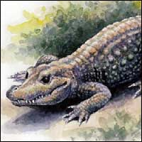 Illustration of an African Dwarf Crocodile.