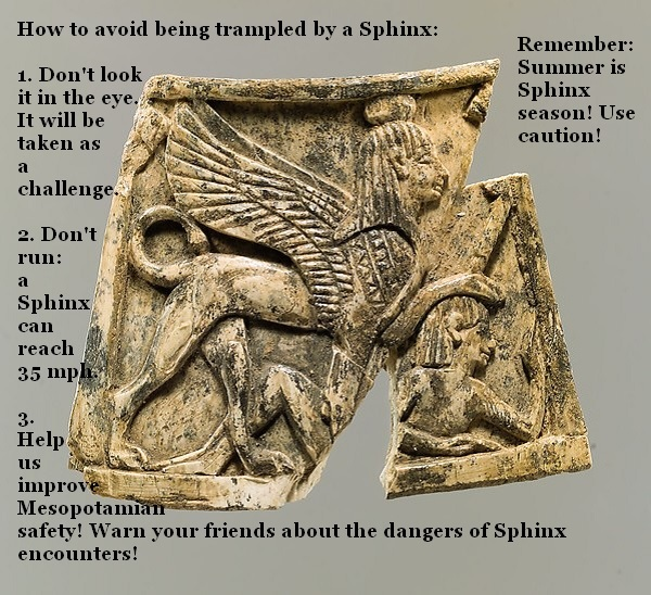 Sphinx season is upon us: know how to avoid being trampled by a Sphinx.'