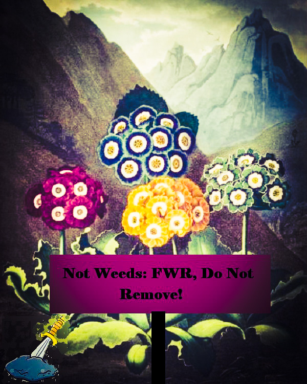 A garden of auriculas, with a warning sign to FWR not to weed them, and his sword in the stone.