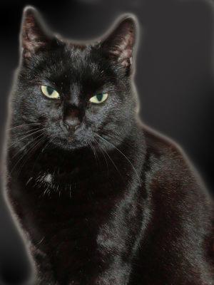 A black cat glowing black on a black background