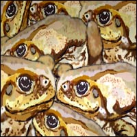 A plague of cane toads climbing across each other.