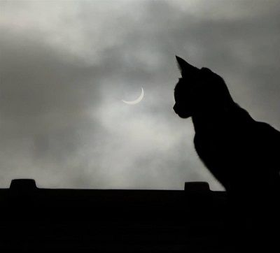 cat eclipse by FWR