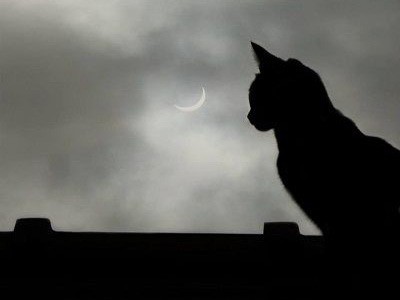 Cat and Eclipse by FWR