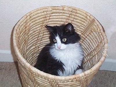 A cat in a waste paper basket.