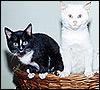 A scruffy kitten - an alternative home for fleas, perhaps?