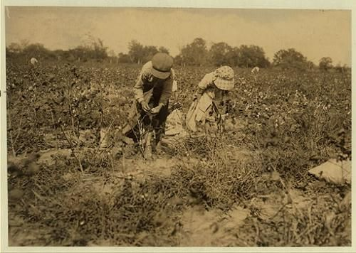 Children picking cotton in Texas in 1913.