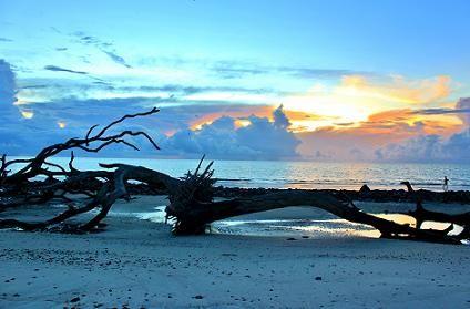 Driftwood Beach, Georgia.