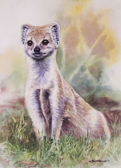 Painting of a yellow mongoose