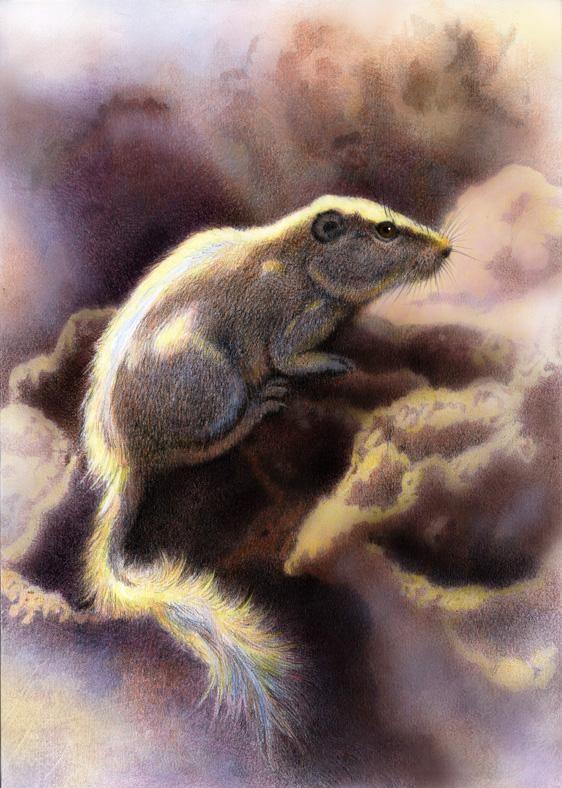 Dassie Rat  by Willem