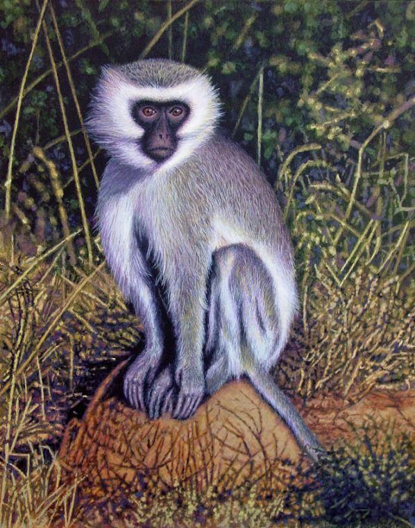 Vervet Monkey by Willem.