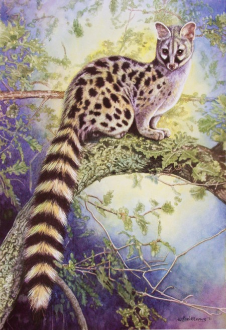 A small-spotted genet.