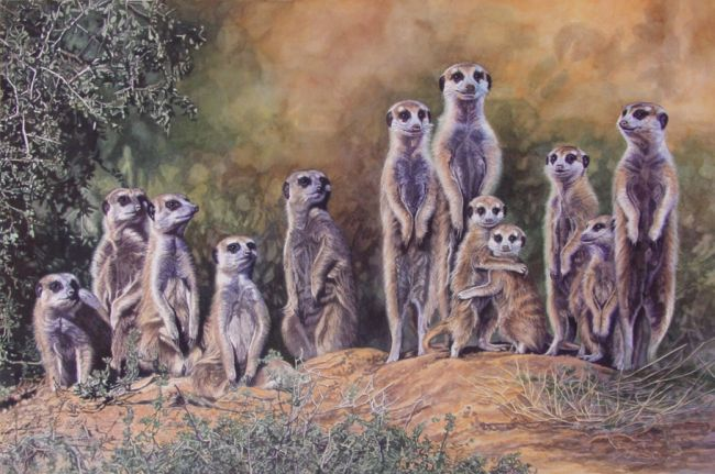 A colony of meerkats. Not genets, not genets at all.