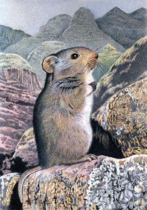 Sloggett's Rat by Willem