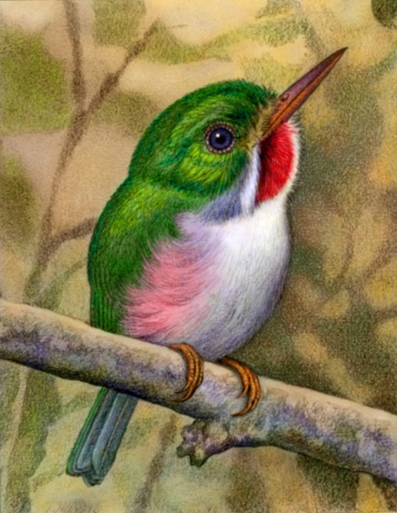 Cuban Tody by Willem