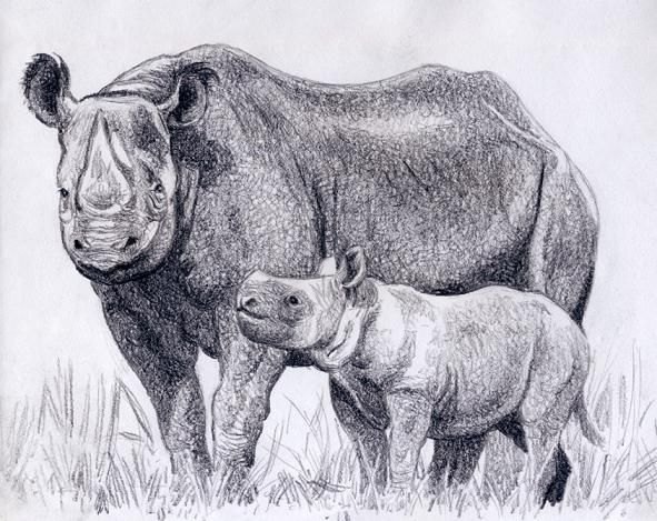 Black rhino cow with calf by Willem