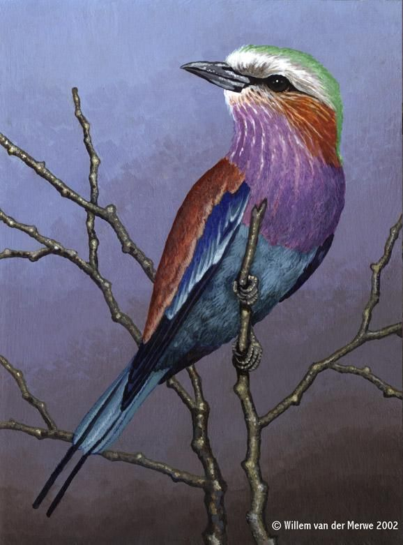 Lilac-Breasted Roller by Willem