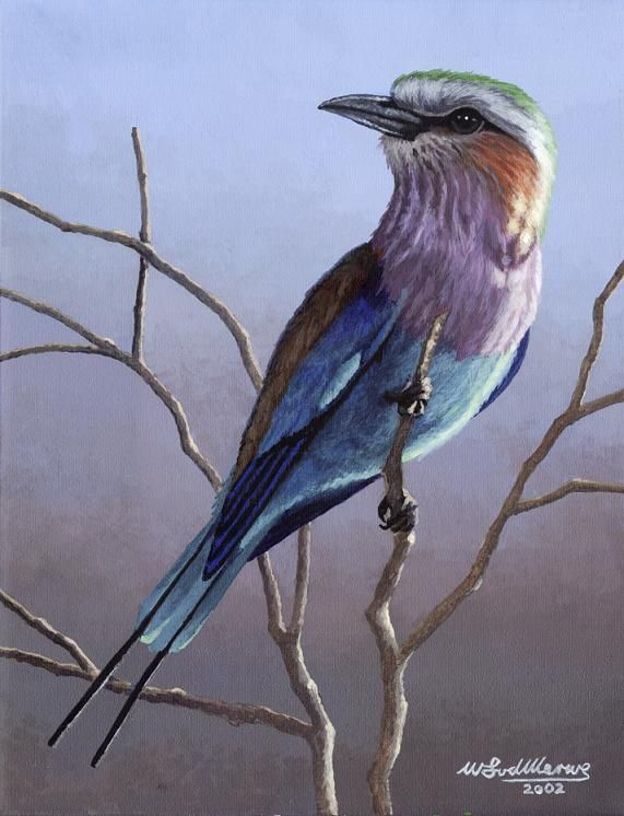 A lilac-breasted roller by Willem.