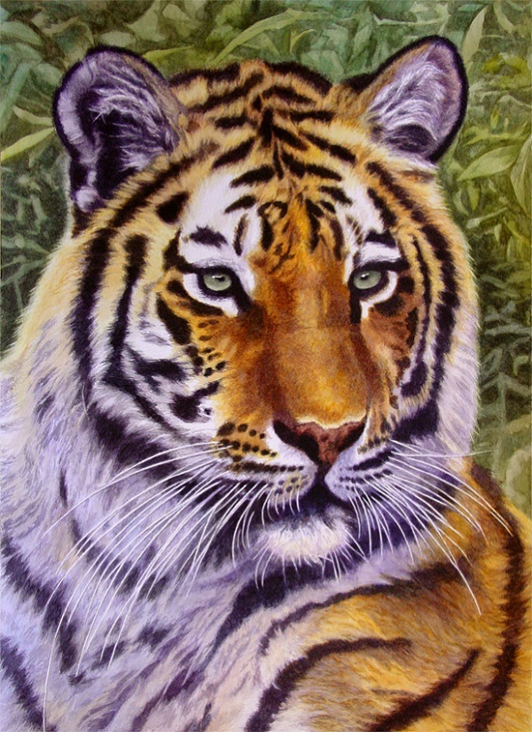 Tiger by Willem.