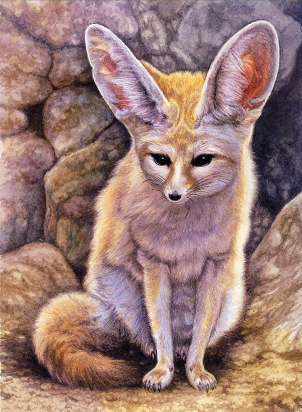 Fennec by Willem