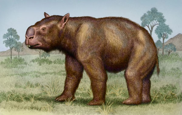 Diprotodon by Willem