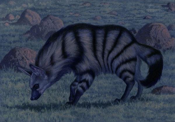 Aardwolf by Willem.