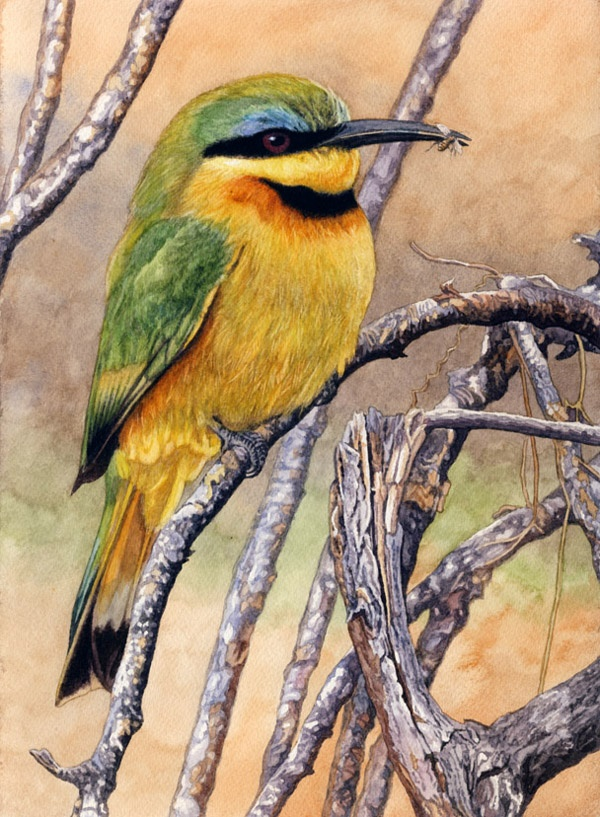 Little Bee-eater by Willem