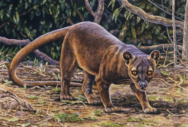 Fossa by Willem.