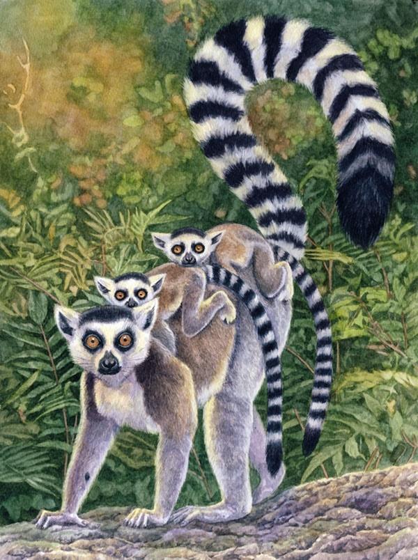 Lemurs by Willem.
