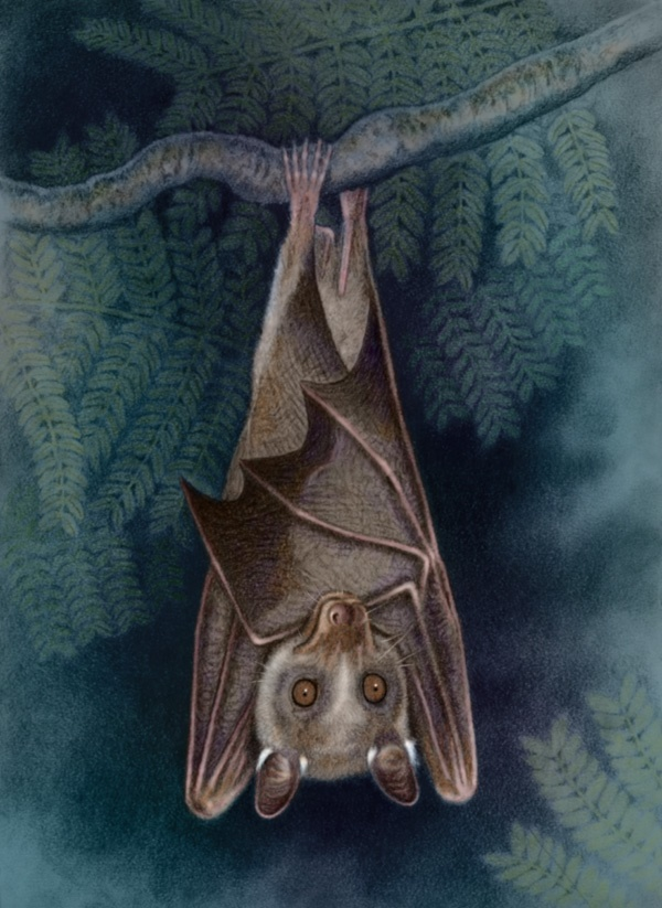 Wahlberg's Epauletted Fruit Bat by Willem.