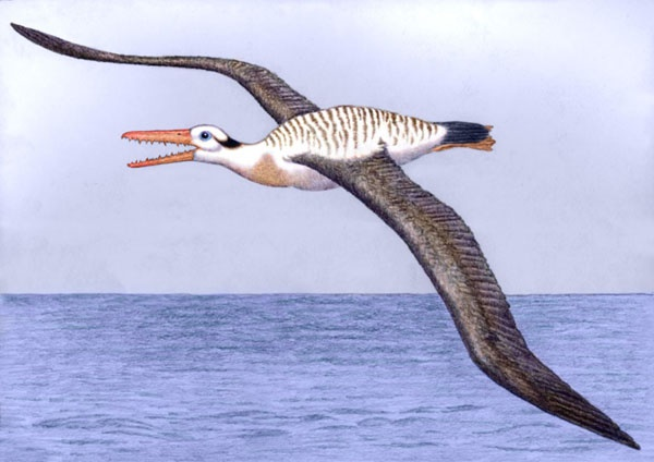 Pelagornis sandersi by Willem.