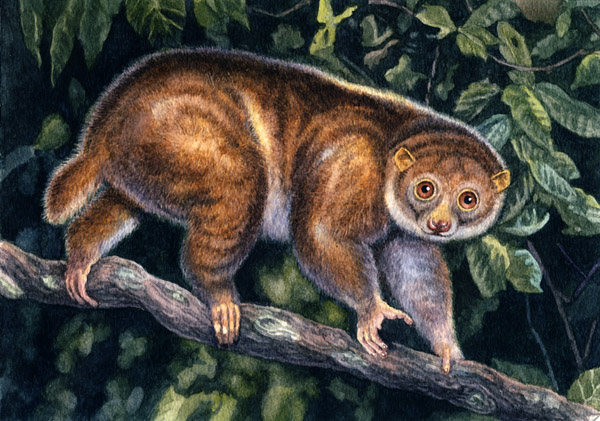 Potto by Willem.