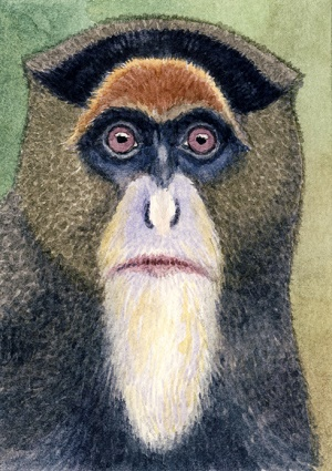 De Brazza's Monkey by Willem