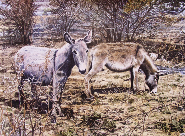 Donkeys by Willem