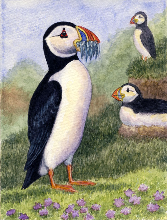 Atlantic puffins by Willem.