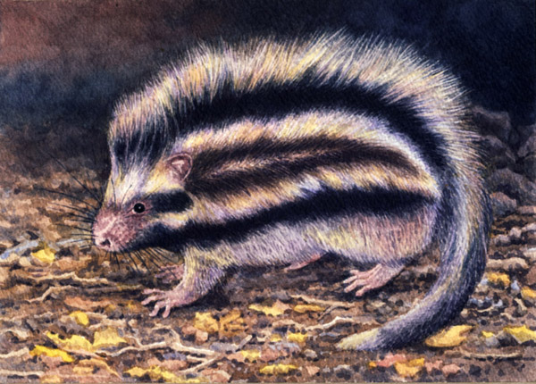 Maned Rat  by Willem.