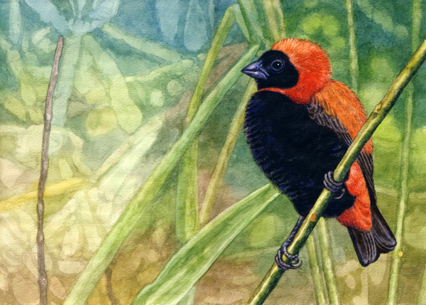 Red Bishop by Willem.