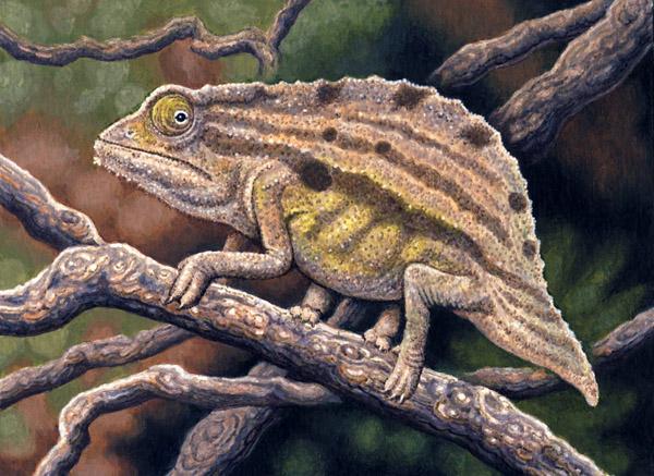 Bearded Leaf Chameleon by Willem.
