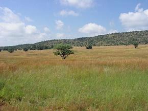 Landscape in Kamonande nature preserve, by Willem